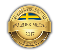 Breeder medal 2017 - Irish Softcoated Wheaten Terrier Club of Sweden